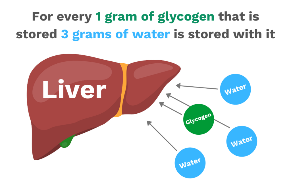 For every 1 gram of glycogen that is stored 3 grams of water is stored with it and why you need your liver to shrink